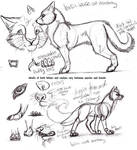 Feline-Canine concepts