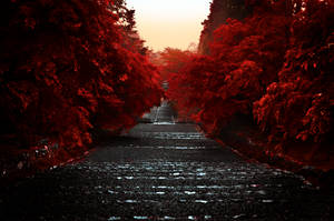 Path Through the Red