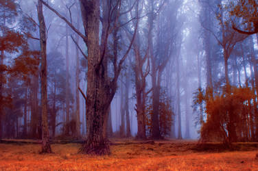 Misted Woods
