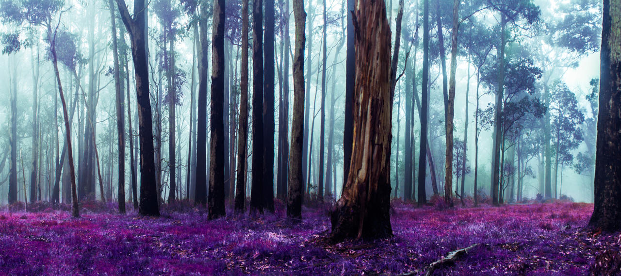 Purple Patch by DavidNowak