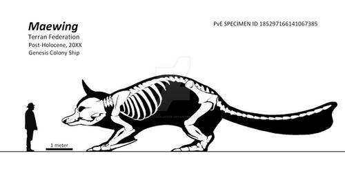 Maewing Skeletal Diagram