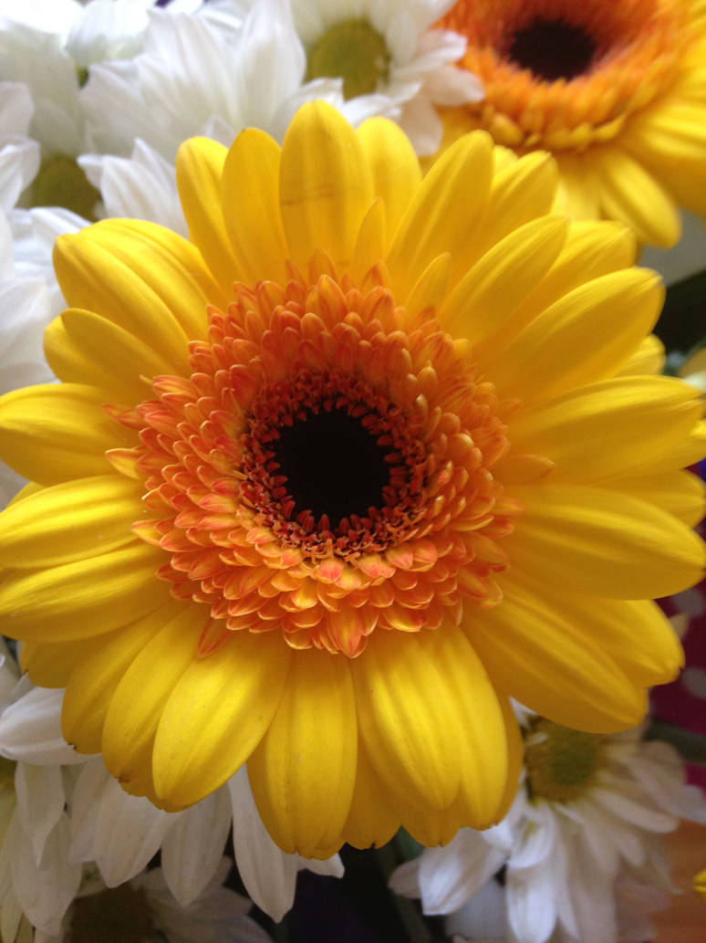 Yellow Flowers are the most Cheerful