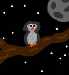 Nervous looking owl