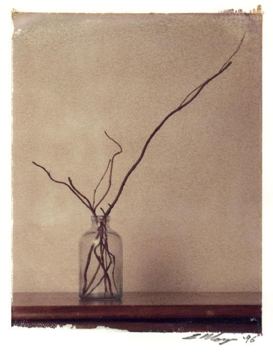 Untitled Still Life by polasam