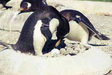Penguin Egg by AinsleyFerin
