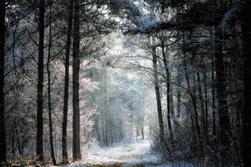 Trees, snow and light by Tjabula