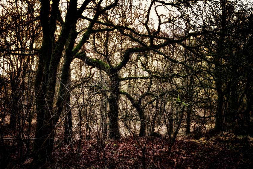 Winterimpression by Tjabula