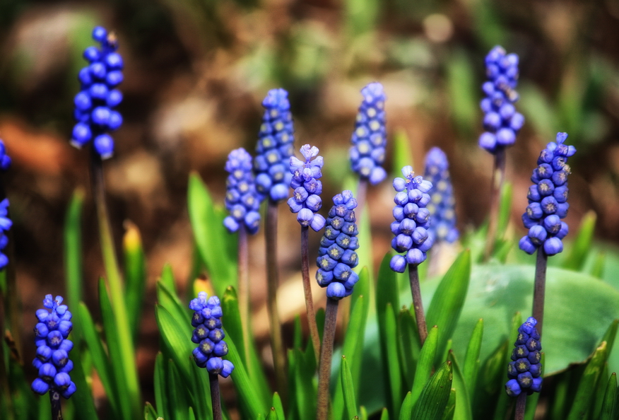 Spring flowers pictures and names image collections flower names of spring flowers with pictures largesize of manly all purple spring flowers i do not mightylinksfo