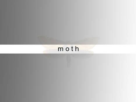 a moths beginning