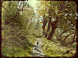 Vintage path