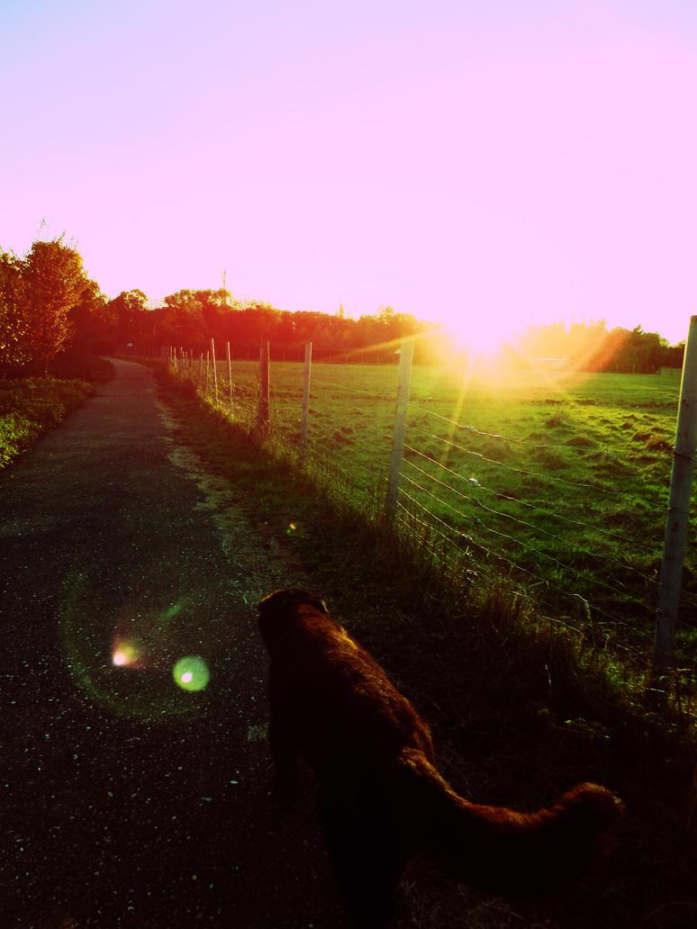 Sunny Dog by Daenel