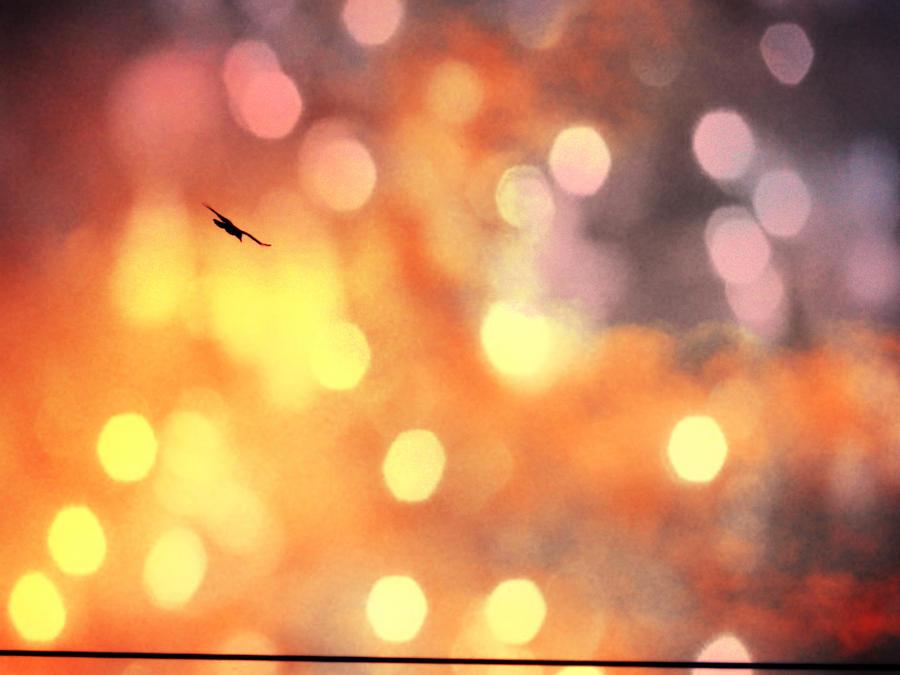 Fly high II. by Daenel