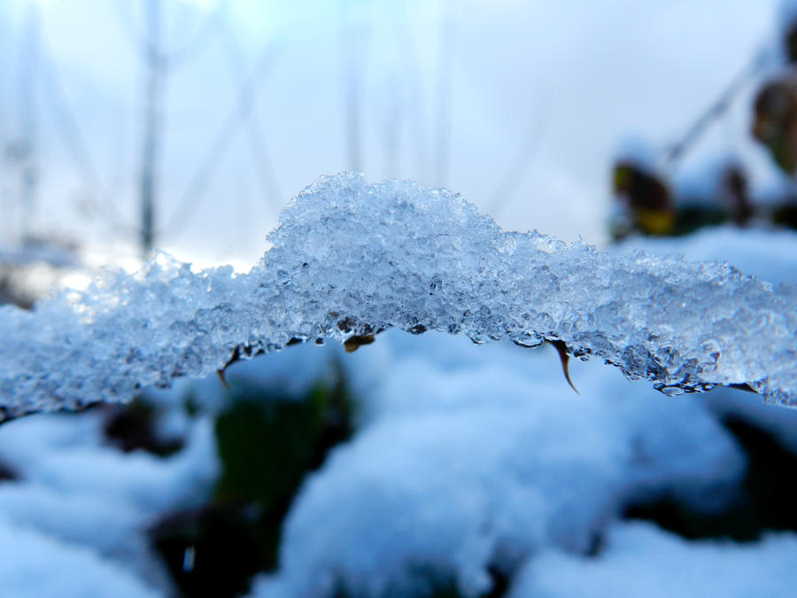 Ice,ice,baby... by Daenel