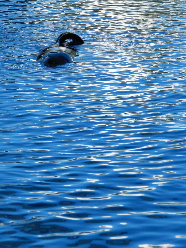 Orca asesina. O no tanto. by Daenel