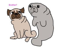 pug and manatee