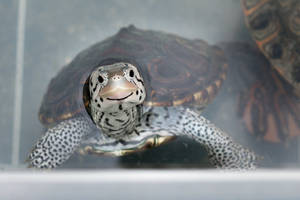 Smilling Turtle by stephane-bdc
