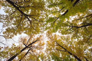 Autumn sky by stephane-bdc
