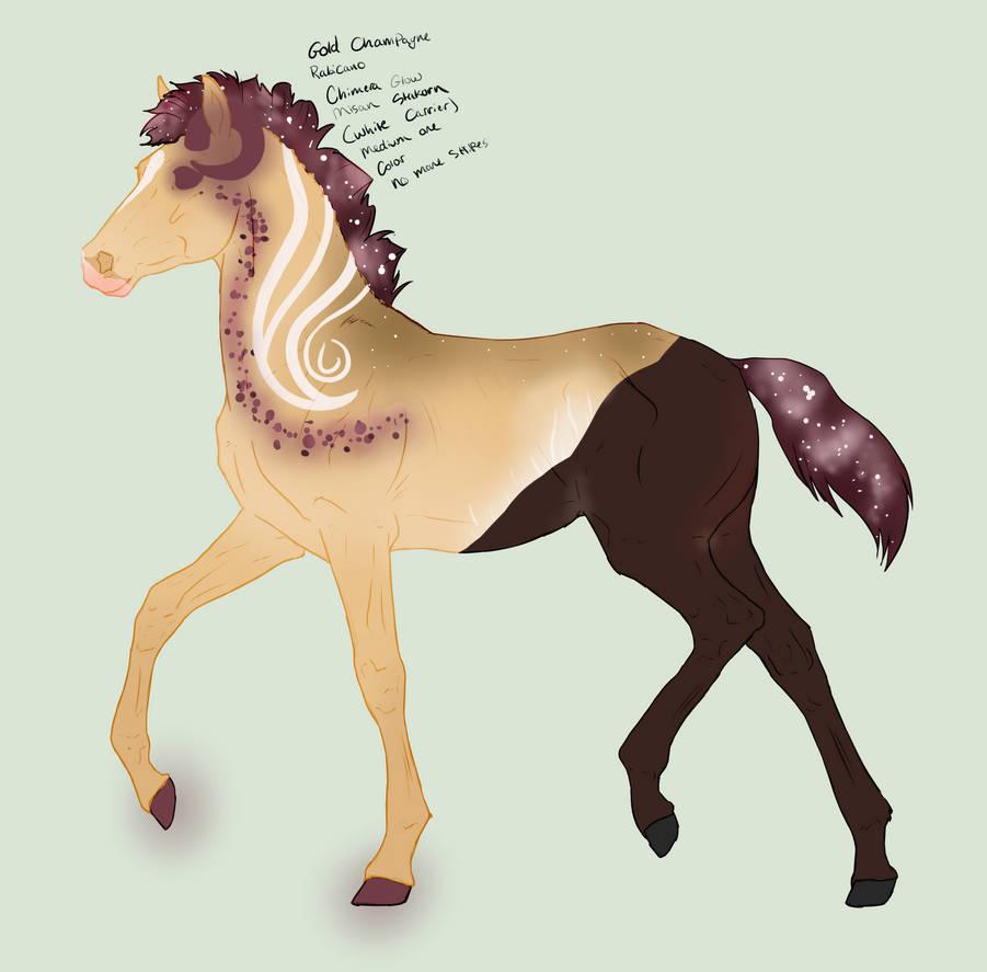 N7751 Padro Foal Design