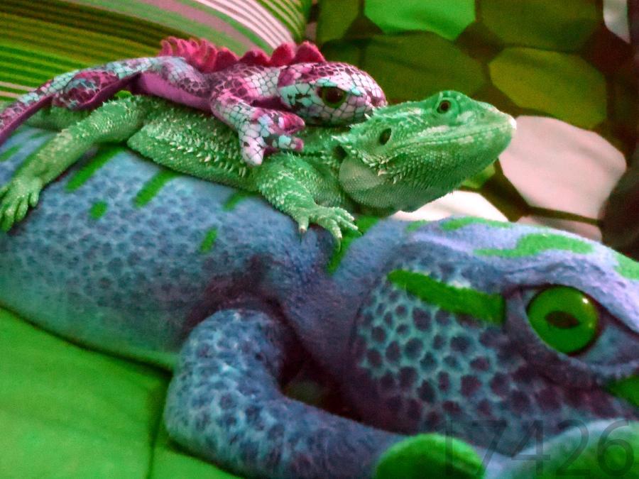 Green bearded dragons - photo#21