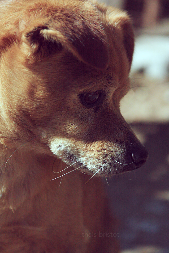 Dog Portrait II by thais-fb