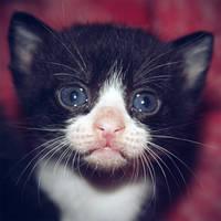 Kitten by thais-fb