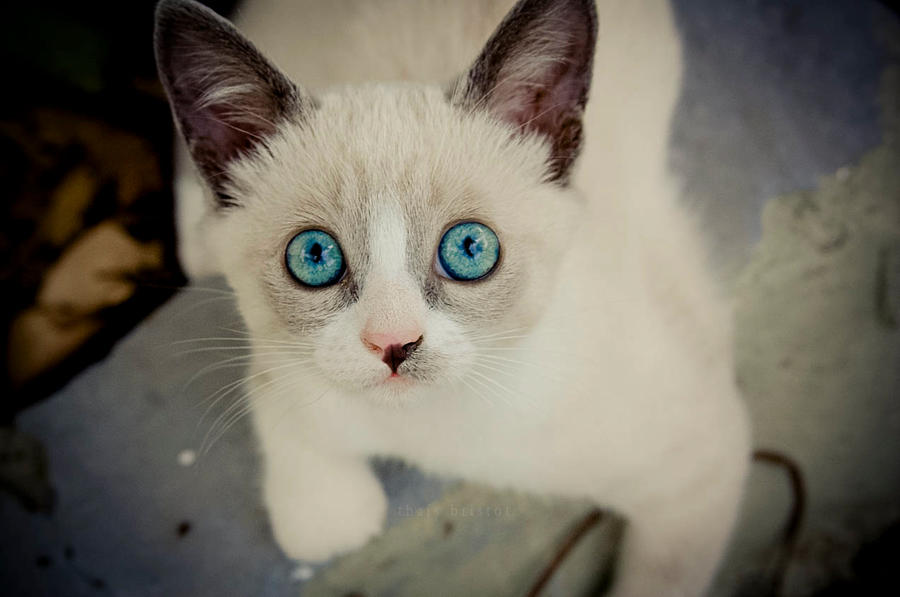 big blue eyes by thais-fb