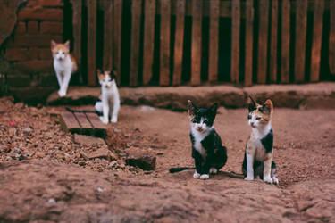 Gang by thais-fb