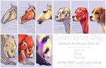 Animal Anatomy Charts by Loustration