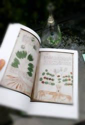 Old manuscript book