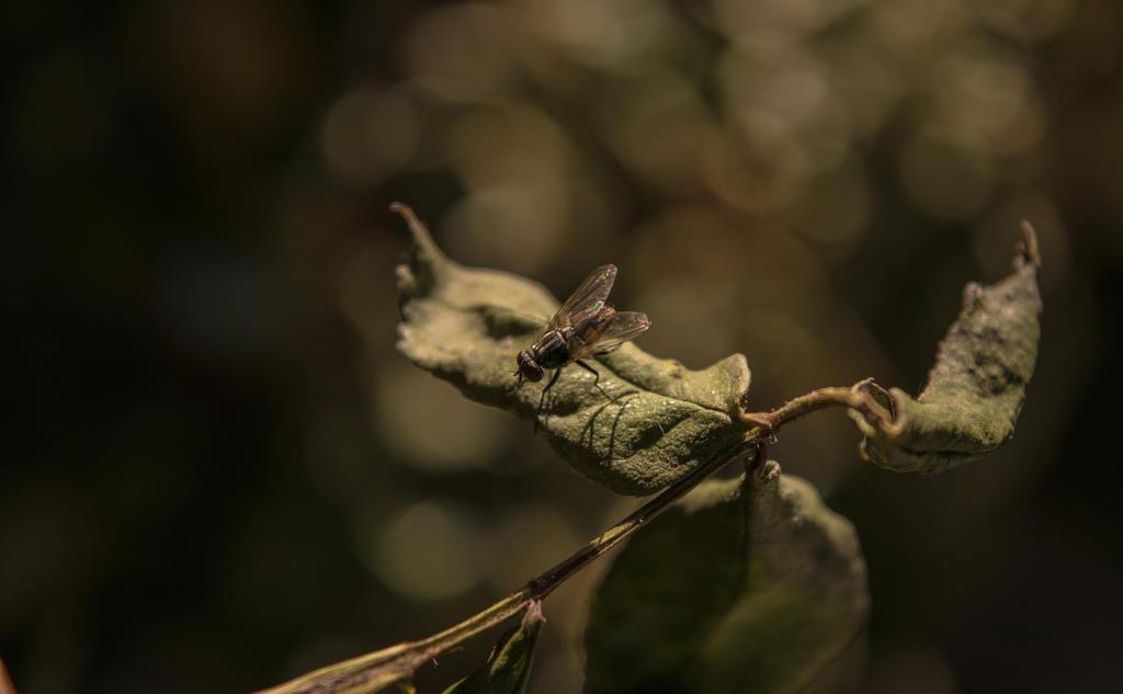 Mr. Fly by DanielNeeta