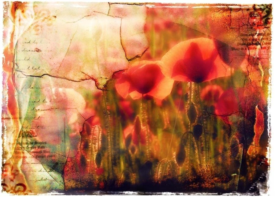 poppies by saiaii