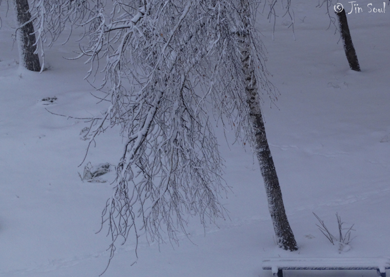 Winter at last by Nijik