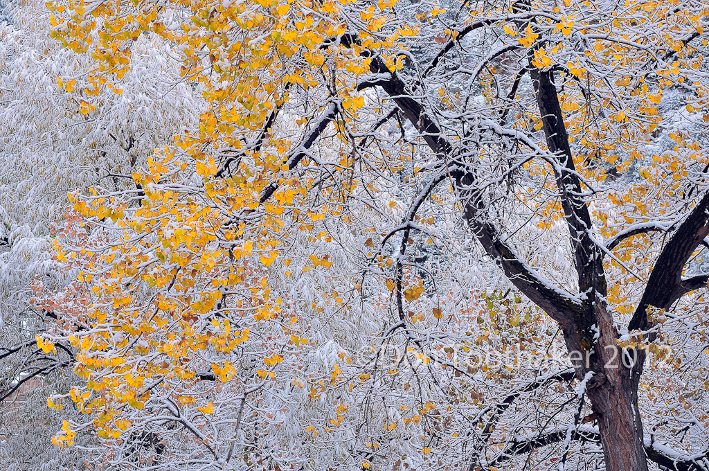 Fresh Snow DT3 3190 by detphoto