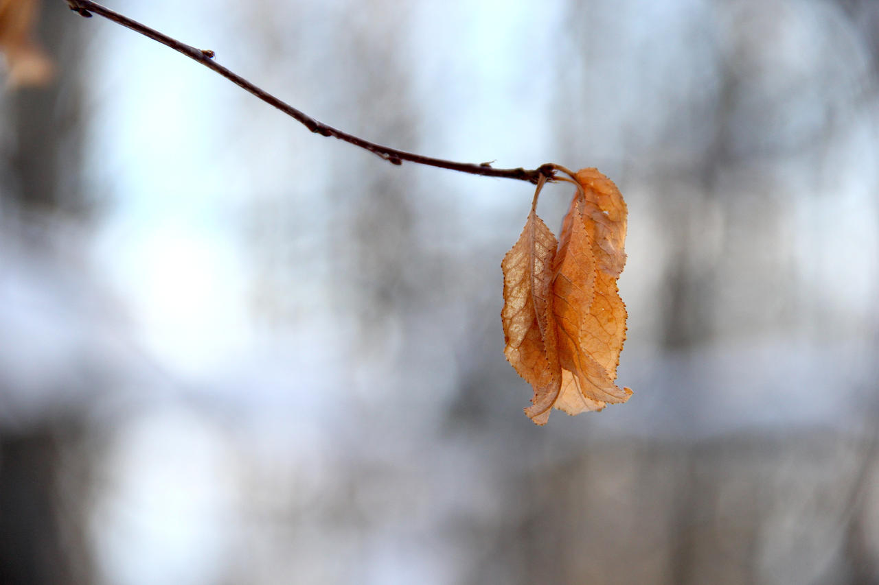 Them Leaves by ScrayVyle