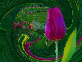Tulip by vafiehya