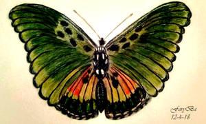Green butterfly! by vafiehya