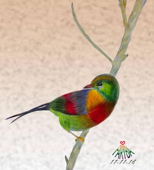 Colorful bird by vafiehya