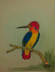 Kingfisher! by vafiehya