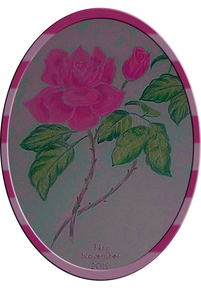 A  pink rose for my dear Jane