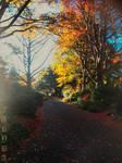 Autumn came again