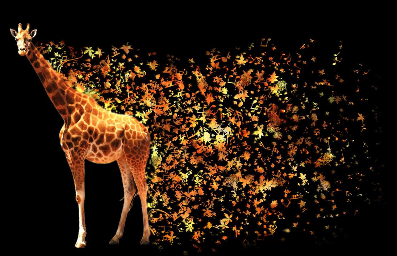 Giraffe Wallpaper By Creatow