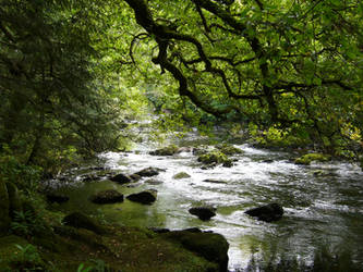 Irish Forrest