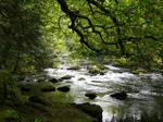 Irish Forrest by DerKnob