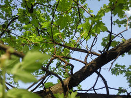 nature by elfbiogreen