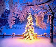 christmas by Abakum