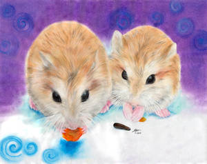 My hamsters -2-