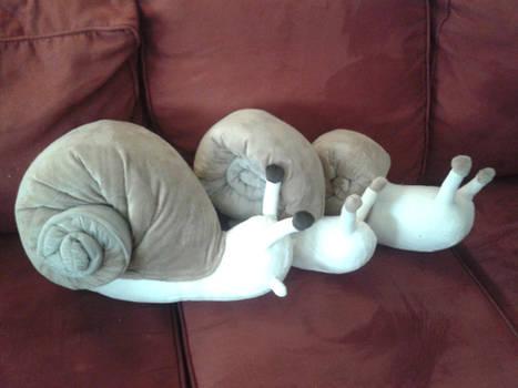 The Evolution of Snails