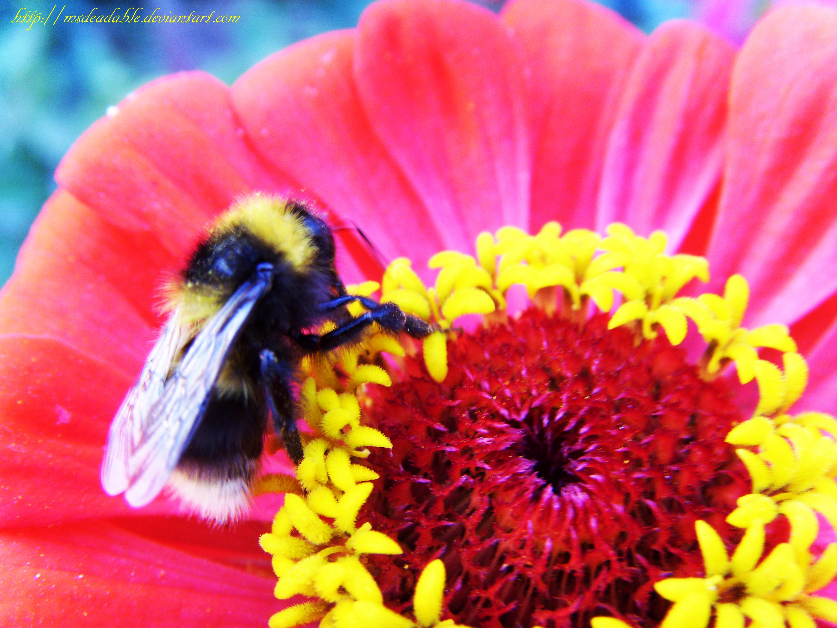 Bumblebee On The Flower by MsDeadable