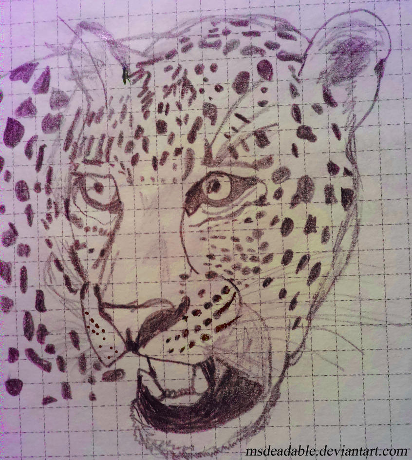 Leopard by MsDeadable