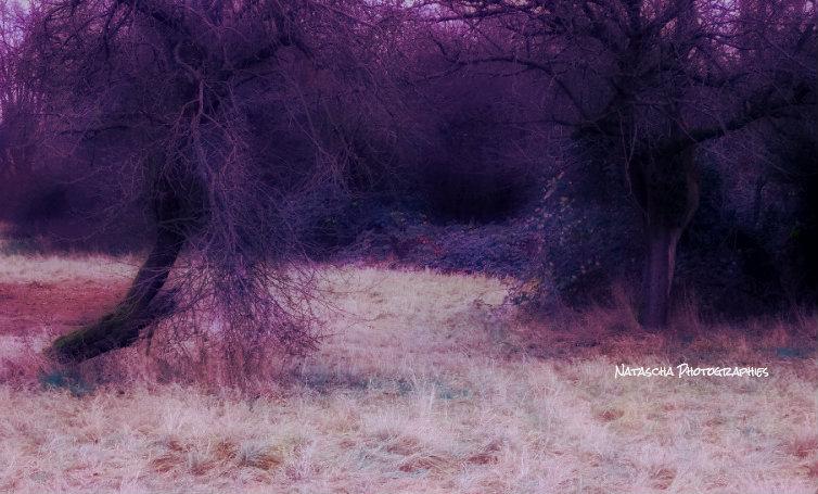 Purple Fields by Nataschaa